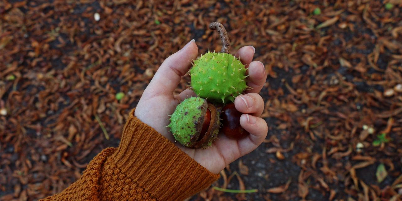 Ideální podzimní den